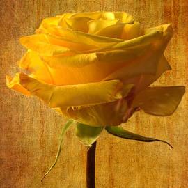Marina Kojukhova - Mellow Yellow
