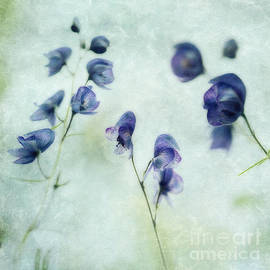 Priska Wettstein - Memories of spring
