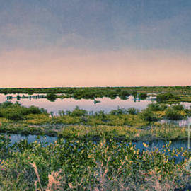 Anne Rodkin - Merritt Island National Wildlife Refuge Panorama