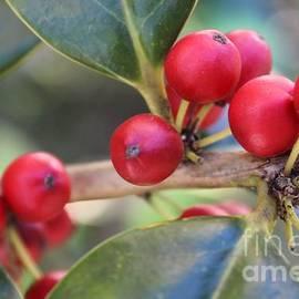 Roberta Byram - Merry Berries