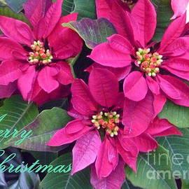 Lingfai Leung - Merry Christmas To You