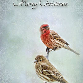 Debbie Portwood - Merry Christmas winter finches