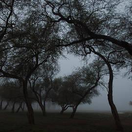 Ed  Cheremet - Mesquite Forest