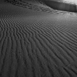 Angela A Stanton - Mesquite Sand Dunes