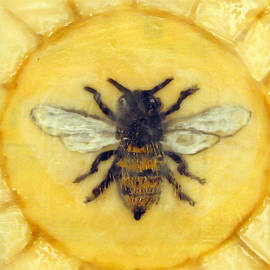 Message of the Bees 1