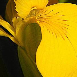 Michael Hoard - Metamorphous Of The Yellow Iris Spring Equinox In New Orleans Louisiana