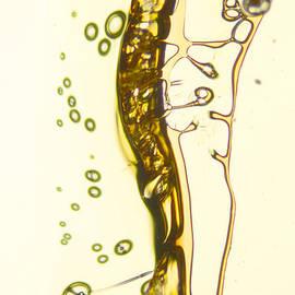 Vin Kitayama - Micro Art Beer 13