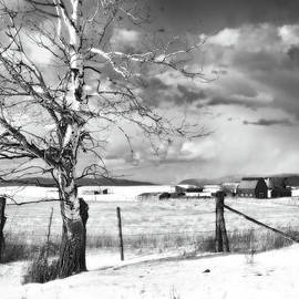 Theresa Tahara - Mid-winter Moonlight