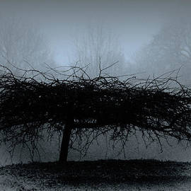 Tony Grider - Middlethorpe Tree In Fog Blue