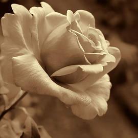 Jennie Marie Schell - Midnight Rose Flower in Sepia