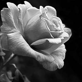 Jennie Marie Schell - Midnight Rose in Black and White