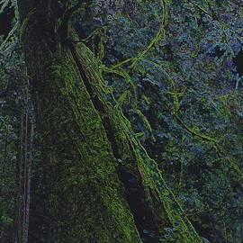 First Star Art - Midnight Tree by jrr