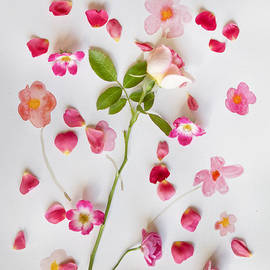 Linde Townsend - Midsummer Floral Dance