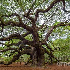 Dale Powell - Mighty Oak