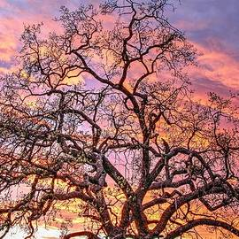 Liz Vernand - Mighty Oak Tree at Sunset