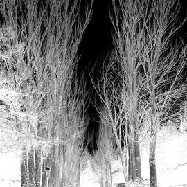 Rick Todaro - Mighty Tall Tree