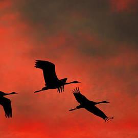 Meir  Jacob - Migrating Cranes Before Sunrise