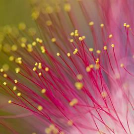 Dan Wells - Mimosa Blossom 3
