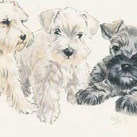 Barbara Keith - Miniature Schnauzer Puppies