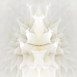 Jennie Marie Schell - Mirrored White Dahlia Flower Abstract