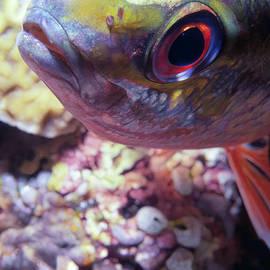 Dawn Eshelman - Miscellaneous Fish 5