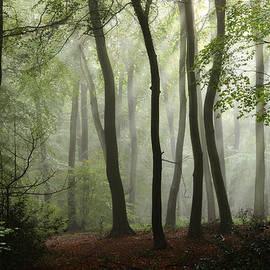 Ceri Jones - Mist in the Woods