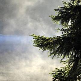 Cathy Mahnke - Mist on Auke Lake
