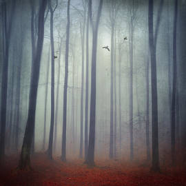 Dirk Wuestenhagen - Misty Forest