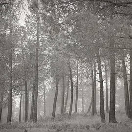 Guido Montanes Castillo - Misty forest