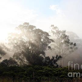 Juan Romagosa - Misty Gum Trees