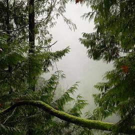 Lisa Knechtel - Misty Mossy Morning