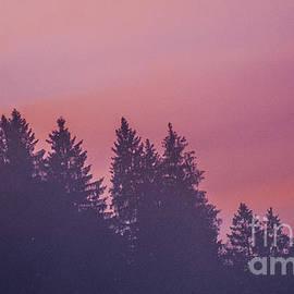 Yuri Santin - Misty sunrise