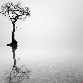 Grant Glendinning - Misty Tree