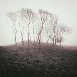 Dave Bowman - Misty Trees