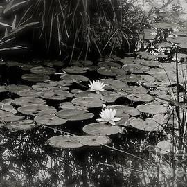 Christie Morgans - Misty Water Mirror