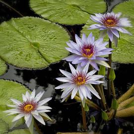 Greg Kluempers - MO Bot Garden Four Lilies DSC06930