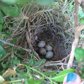 Beth Williams - Mockingbird Nest