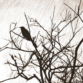 Linda Rae Cuthbertson - Mockingbird Silhouette