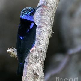 Elizabeth Winter - Mohawk Bird