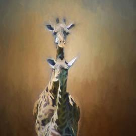 Darren Fisher - Mom and baby Giraffe