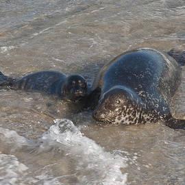 Lee Kirchhevel - Mom and Baby Harbor Seal