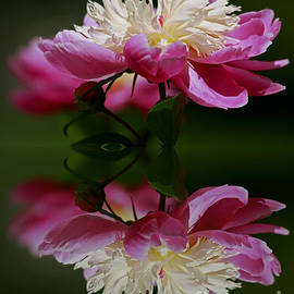Inspired Nature Photography By Shelley Myke - Moments of Reflection