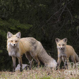 Sonya Lang - Momma Fox with her Kit
