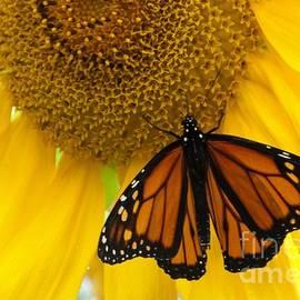 Ann Horn - Monarch and Sunflower
