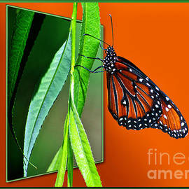 Thomas Woolworth - Monarch Butterfly 01