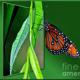 Thomas Woolworth - Monarch Butterfly 03