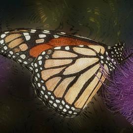 Jack Zulli - Monarch Butterfly
