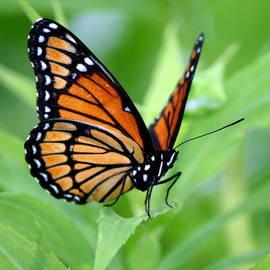 Neal  Eslinger - Monarch Dreaming