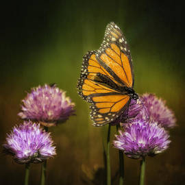 Bill Tiepelman - Monarch on Moody Chives