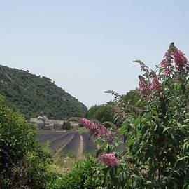 Pema Hou - Monastery Lavender and Lilac